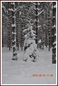 2010-02-07 Vinterlandskap  Fjällmossen 21
