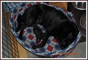 2010-04-06 Sover sött