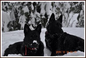 2010-12-18 Dixy & Kaxa 13