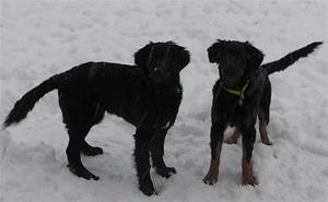 Aston & Alexia leker vinter 2012