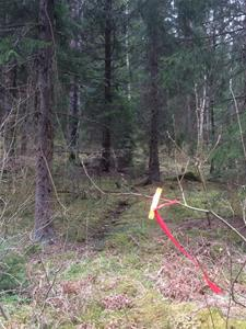 spår i skogen