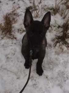 Berk i snön