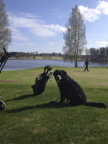 Milton på golfbanen