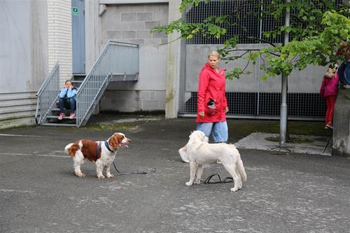 To hunder som står