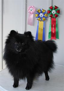 Gina_champion 150325