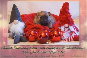 God Jul önskar Lena, kennel Saltspring