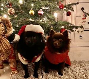 God Jul önskar Linda, kennel Mästermyrs