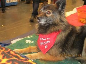 En av de duktiga hundarna som hjälpte till på My Dog 2012