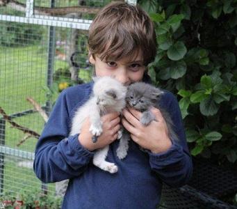 Dennis med kattungar
