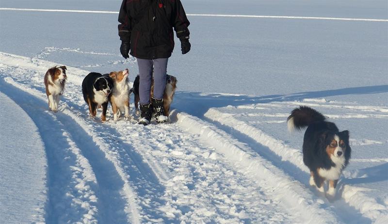 januari på väg ut på isen  P1150447