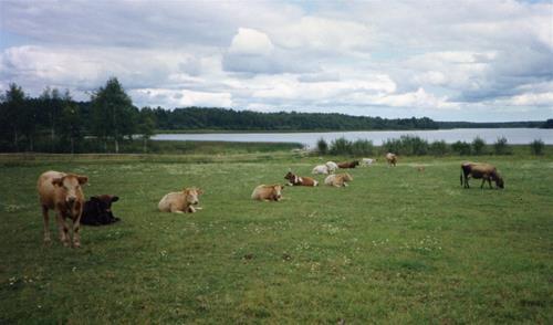1        12 kor på sommarbete - Kopia