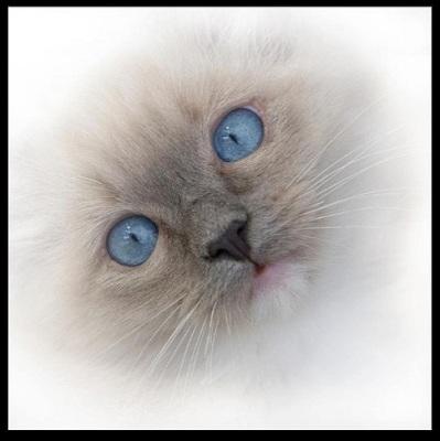 Bajsans kattunge