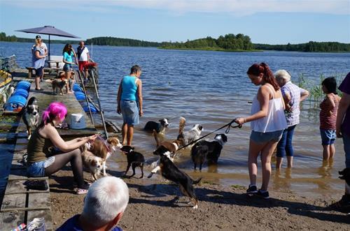 valpträff Bad med hundarna