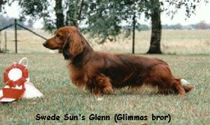 Swede Sun's Glenn