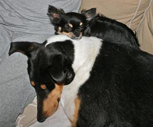 Bonnie och Sammy sover ihop