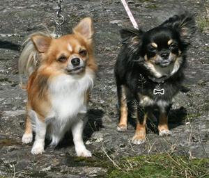 Bonnie och morbror Bobo