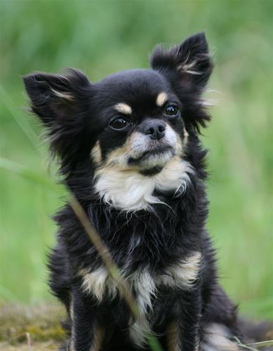 Bonnie 4 år
