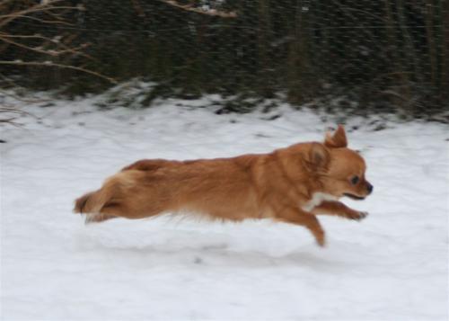 Elsa flyger i snö 10,5 mån