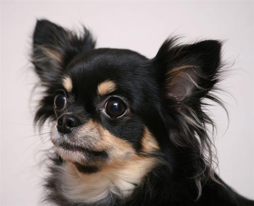 Bonnie huvud 2,8 år