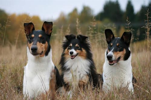 Sammy, Tova, Nikita