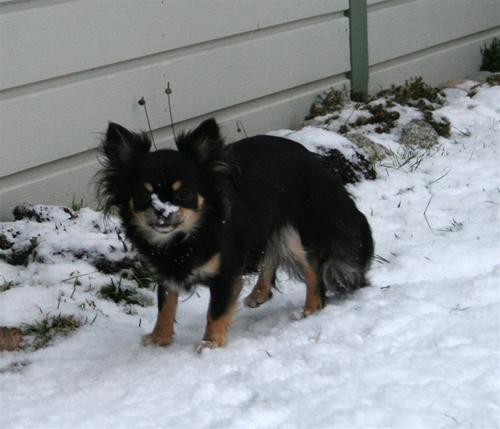 snö på nosen Bonnie