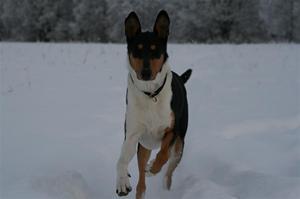 Sammy vintern 09/10