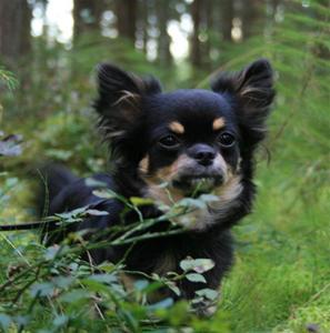 Bonnie i skogen