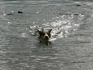 simmar sommar 2010