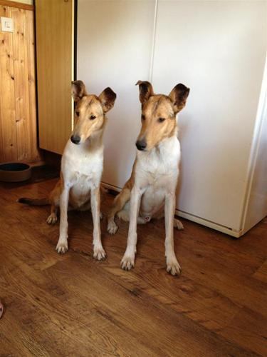 Ivar och Ica 1 år