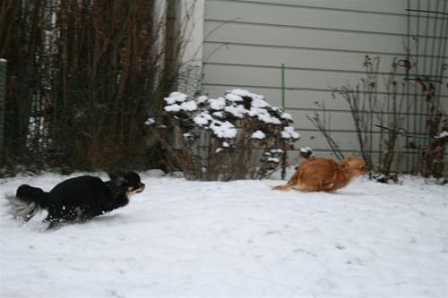 Elsa Bonnie race i snö