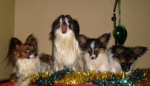 Julkortsmarodören