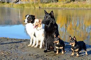 Flott oktoberdag og hundetreff. :) Otto og Penny(Trines hunder) Vinni og Vesla