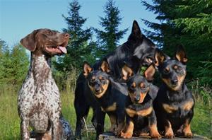 Isa, Vinni, Sid, Vesla og Pia