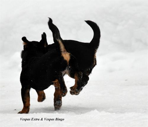to-hoppende-heeler-romper-vixi-og-vinni1[1]