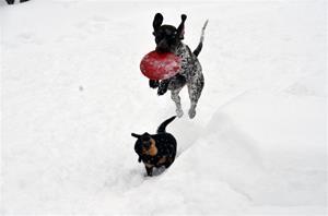 fuglehund (800x530) (800x530)