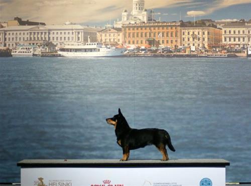 vesla Finland