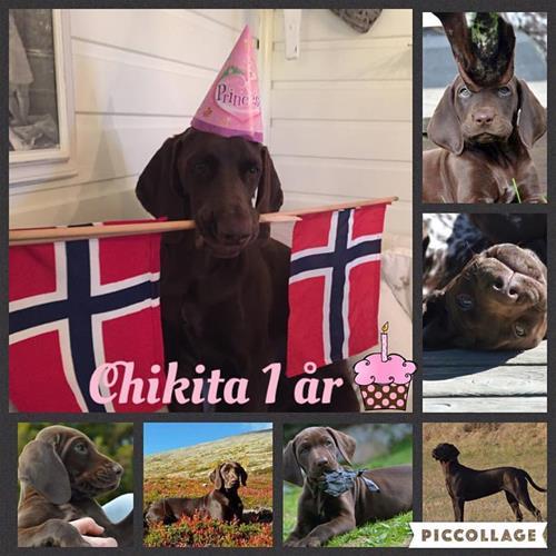 Chikita 1 år