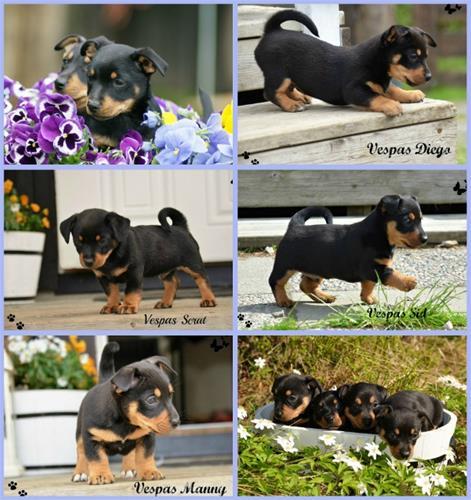 PicMonkey Collage (603x640)