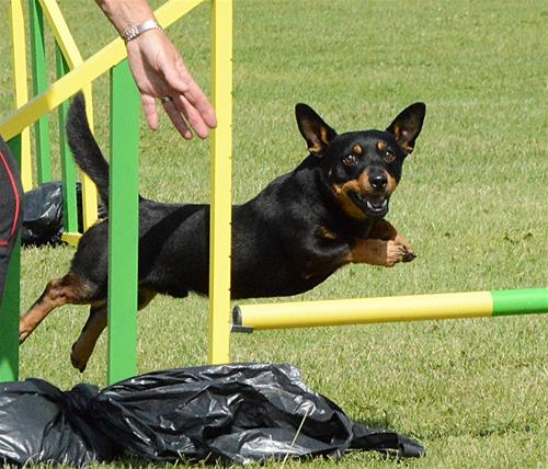 Emil agility