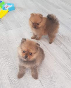 Fiona och Rosso 1