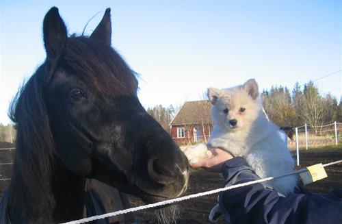 Benita hilser på hesten 6-11-2007