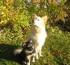 Birka og Asca  1-11- 2007 (2)