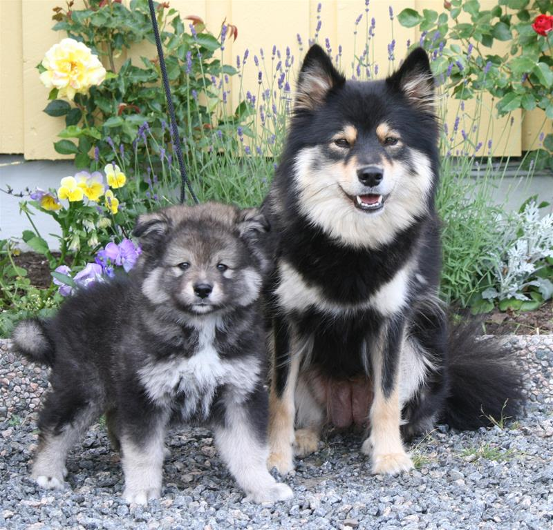 Storm og mor