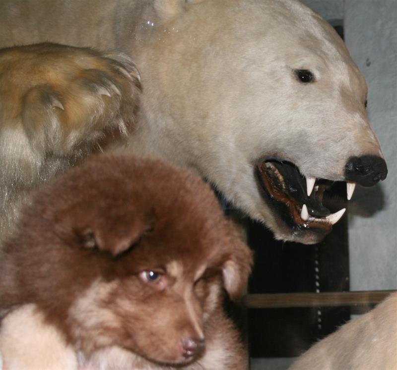 Heiko og Isbjørnen 27-8-09