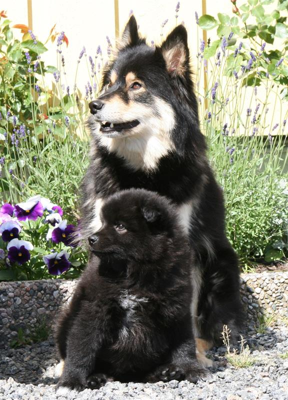 Kimmi og mor