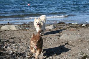 Asca og Heiko  leker