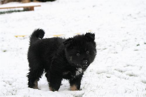 snø 5