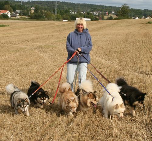 Alle våre 6 hunder 17 aug 2008 a