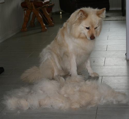 TTrist å miste så mye pels
