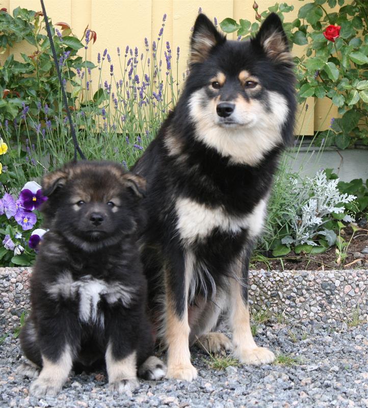 Pax og mor